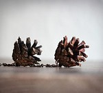 Pinecone Earrings by Magpies Shop