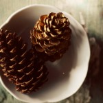Winter Pinecone Photograph by Dull Blue Light Photography
