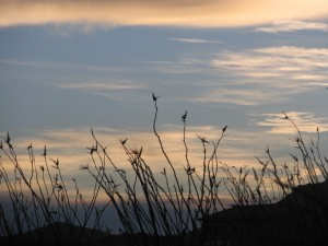 sunrise ocotillo birds