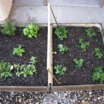 herb garden and strawberry patch