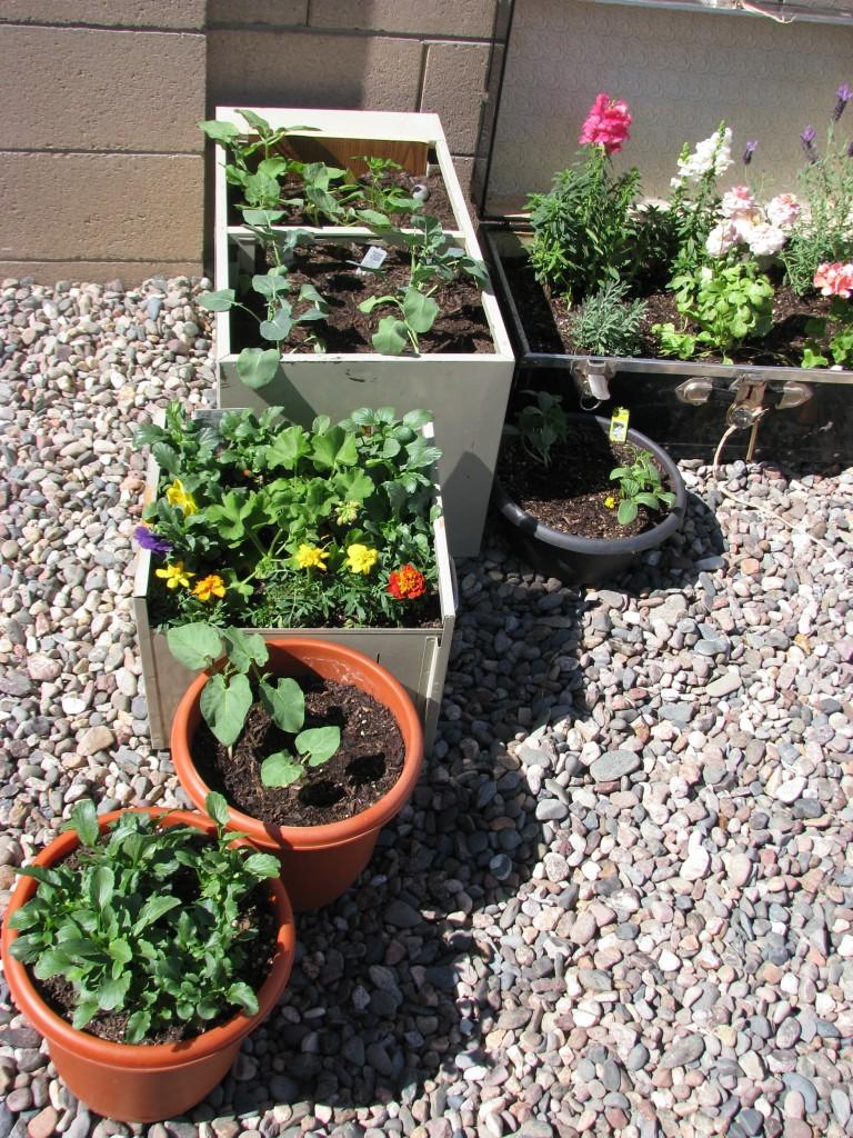 left side of garden