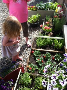 Grandpa 'hid' strawberries in the strawberry patch for Easter!