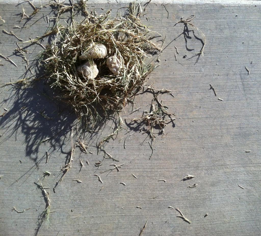 Backyard Birds' Nest